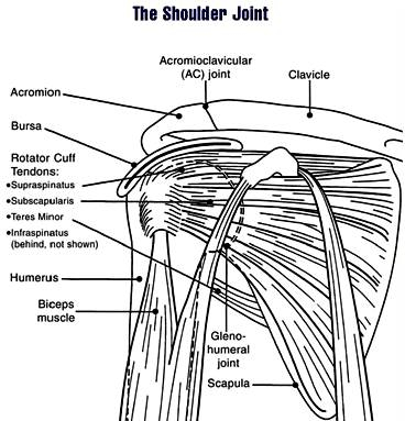 The shoulder - the cause of strength or nagging.